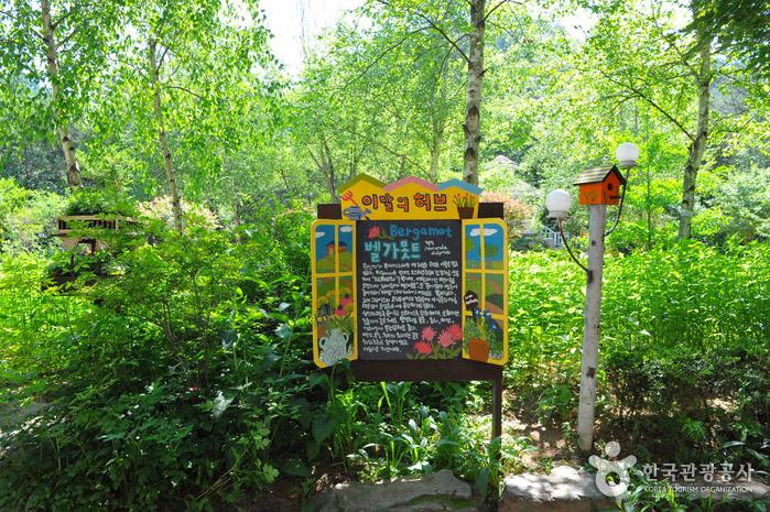 Herbnara Farm. / Foto: Korea Tourism Organization
